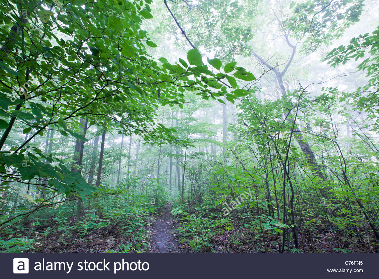 a-foggy-day-in-late-summer-in-the-caroli