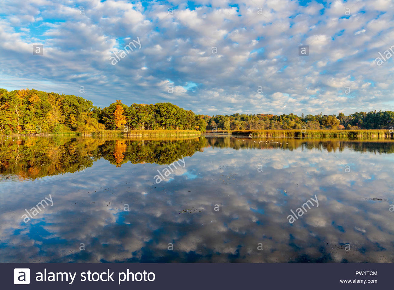 early-autumn-reflections-on-rouge-pond-p