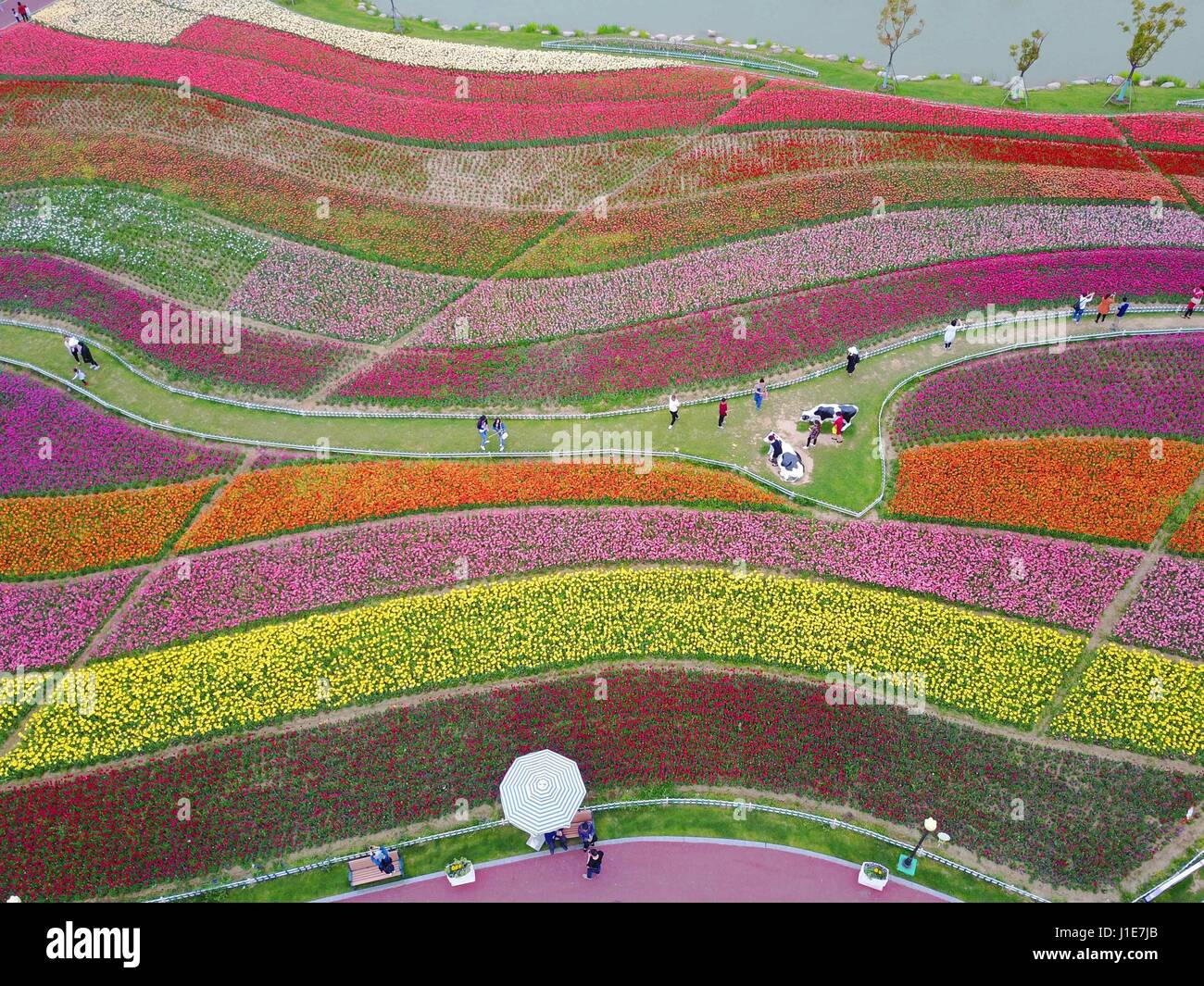 Yancheng, Yancheng, China. 20th Apr, 2017. More than 30 million tulips blossom at a scenic area in Yancheng, east - Stock-Bilder