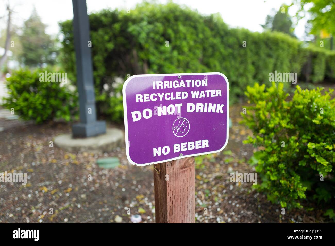 Purple sign for recycled water system, used for irrigation, in the Silicon Valley town of Mountain View, California, - Stock Image