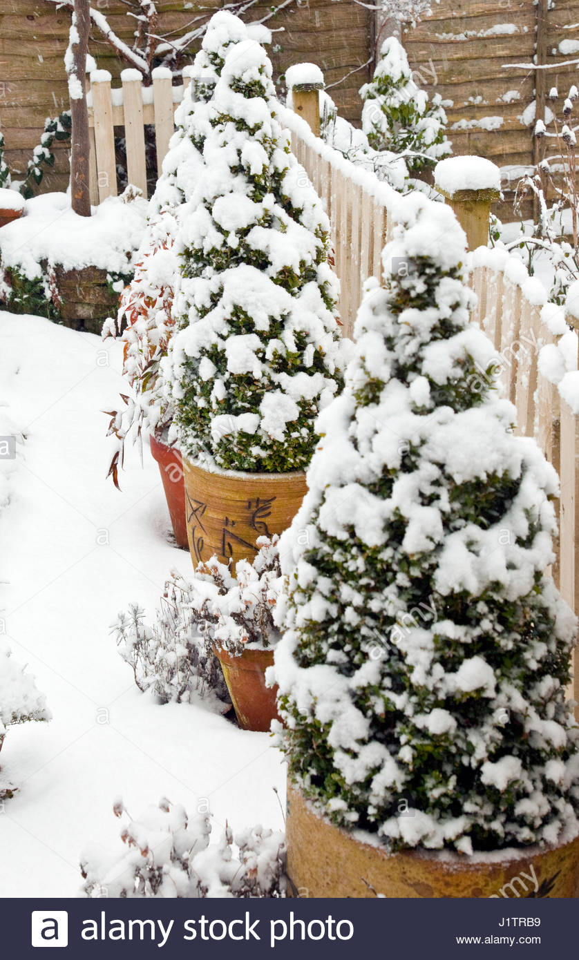 SNOW FALL  WINTER AT HIGH MEADOW - Stock Image