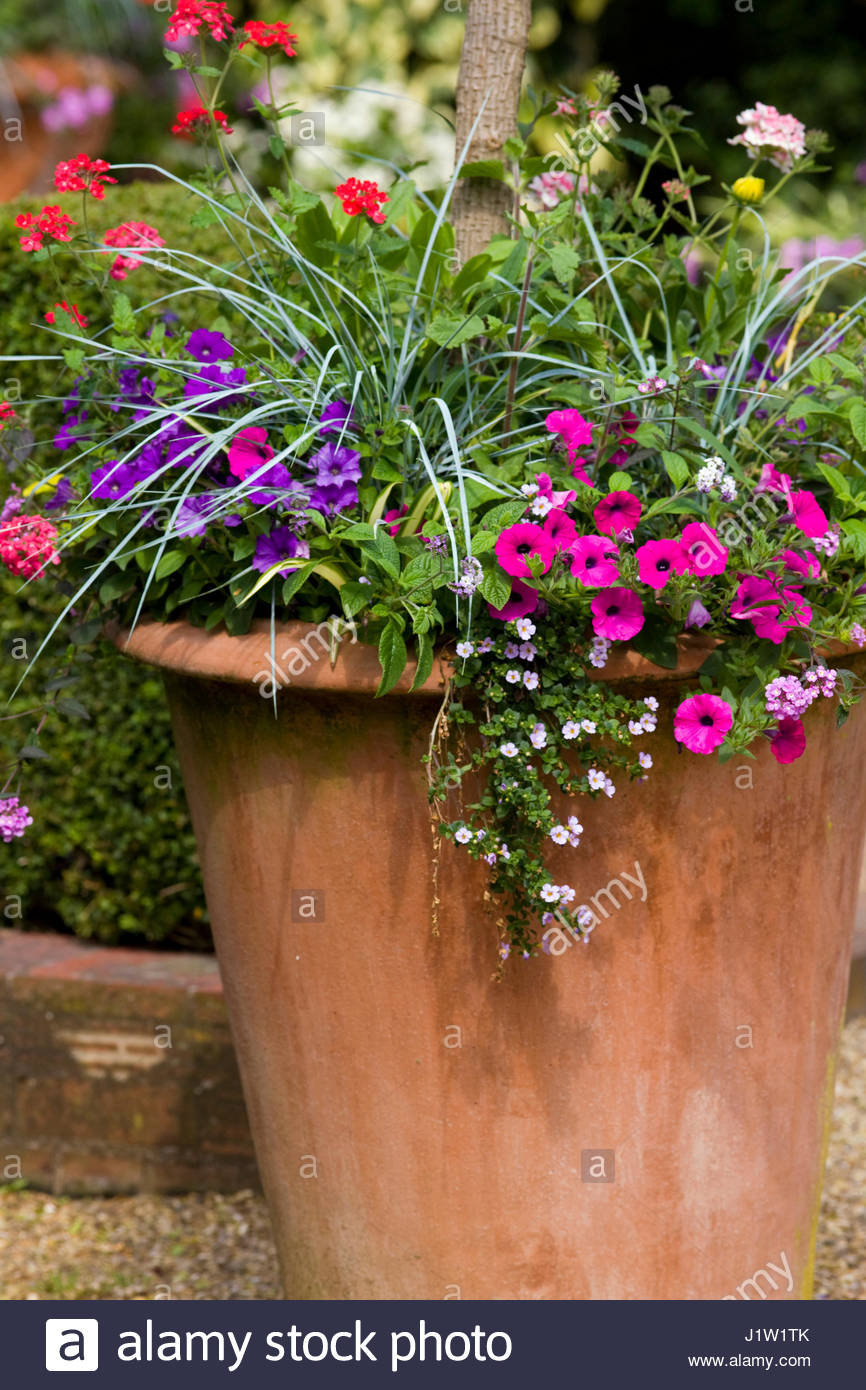 MIXED SUMMER CONTAINER - Stock Image
