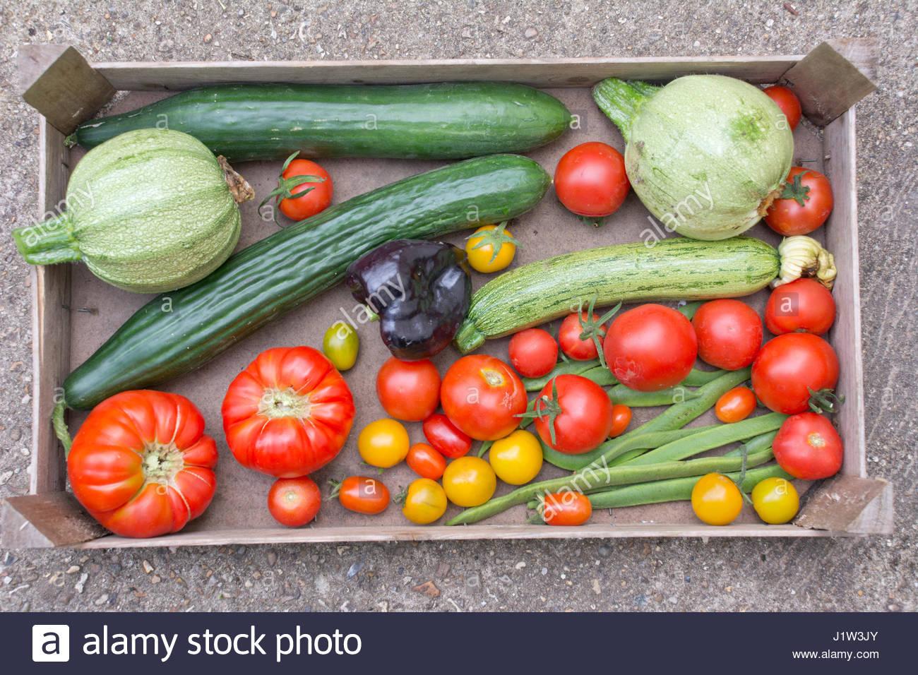 ALLOTMENT HARVESTED VEGETABLES - Stock Image