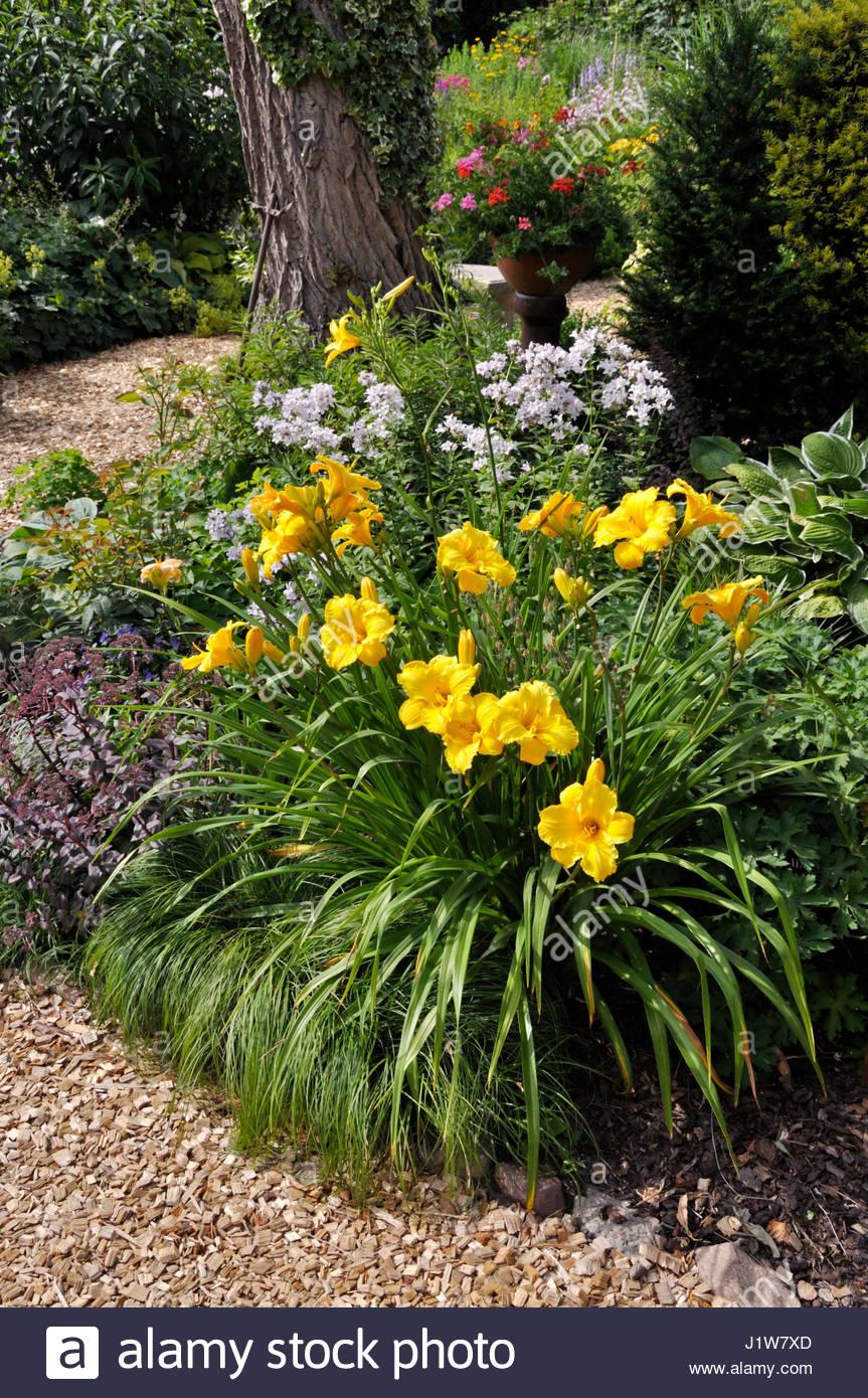 Hemerocallis stock photos hemerocallis stock images for Xd garden design