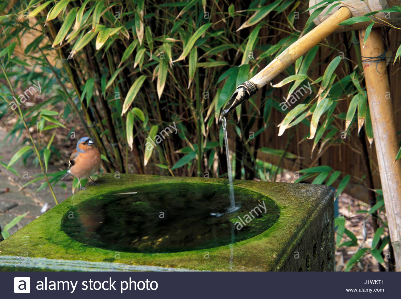 Japanese water feature stock photos japanese water for Japanese bamboo water feature