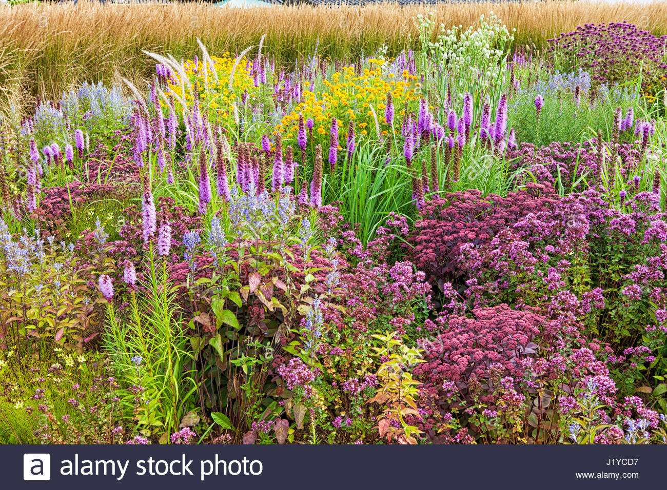GRASSES PRAIRIE GARDEN - DESIGN BY LIANNE POT - Stock Image