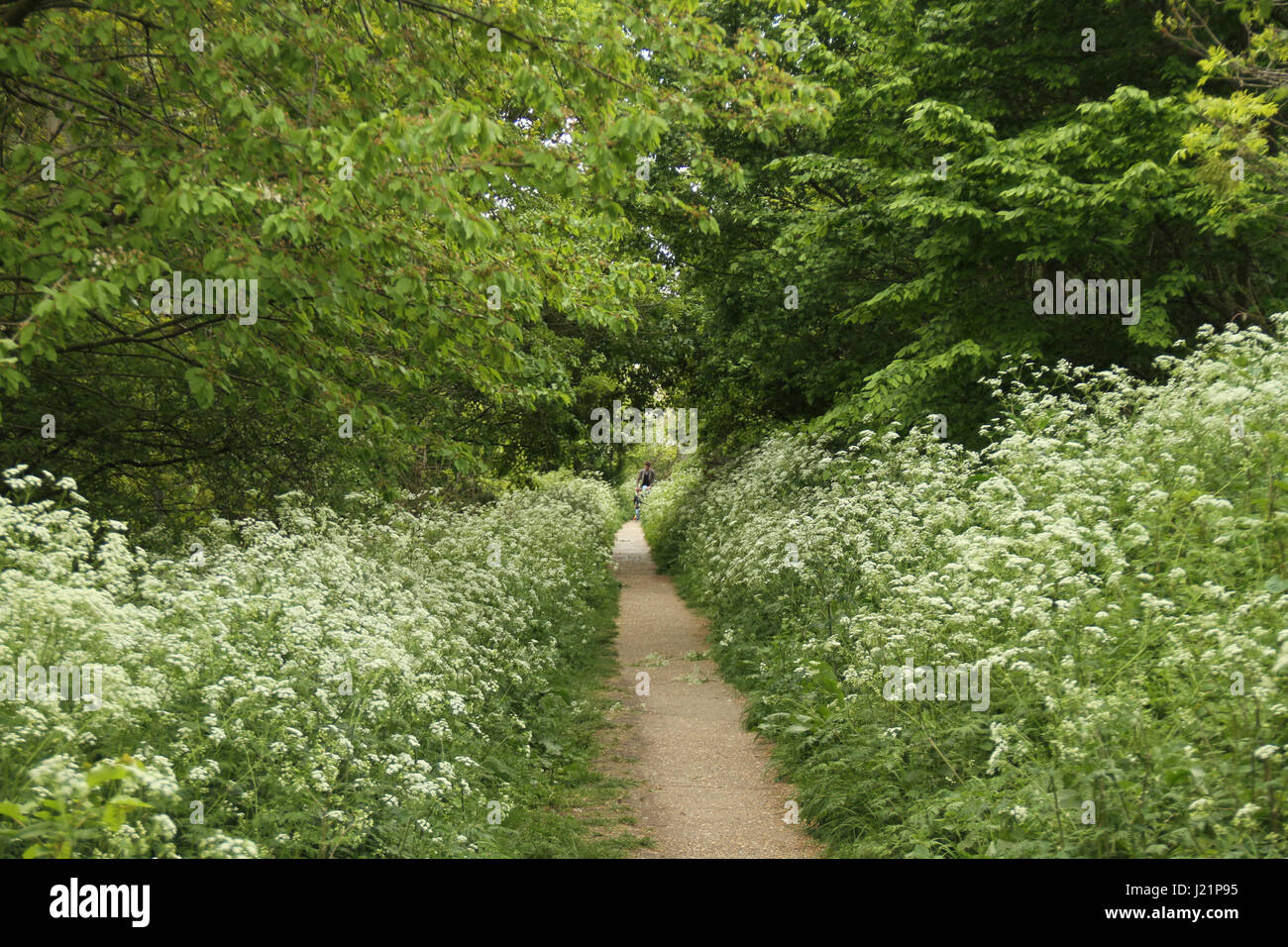 London, UK. 23rd Apr, 2017.  People seen walking through a path with wildflowers in boom on a Sunny day out at MadchuttePark - Stock Image