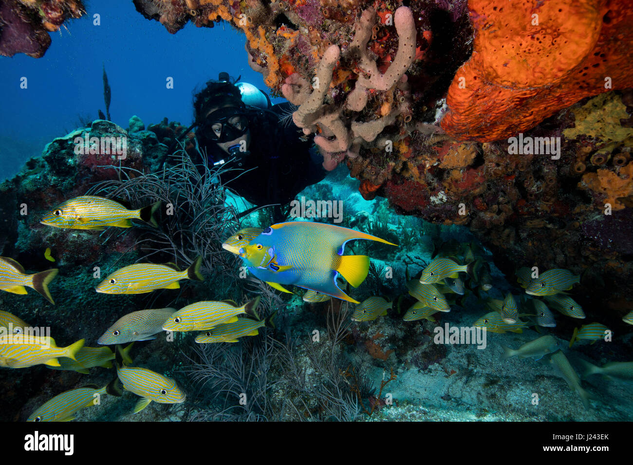 Reef scene with scuba diver and schooling fish. - Stock-Bilder