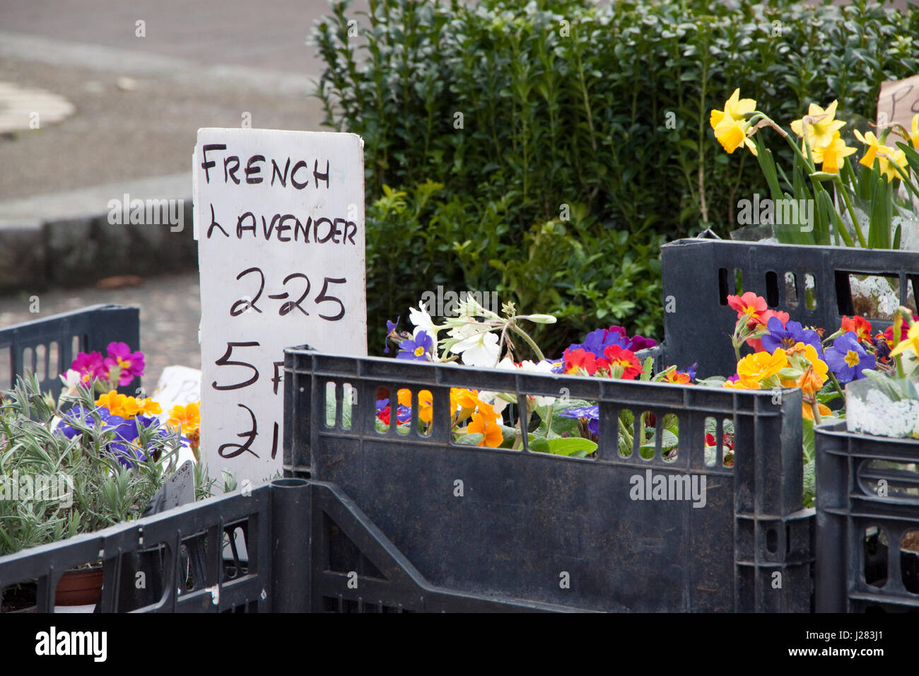 Flowers in plastic crates for sale on a street market - Stock Image