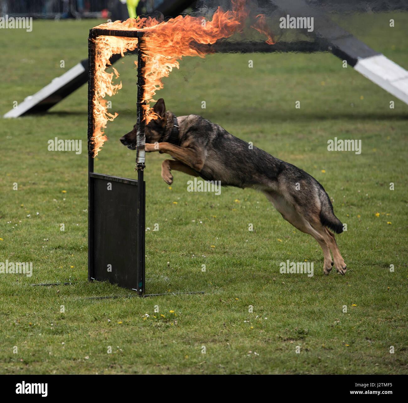 Essex Dog Show Brentwood