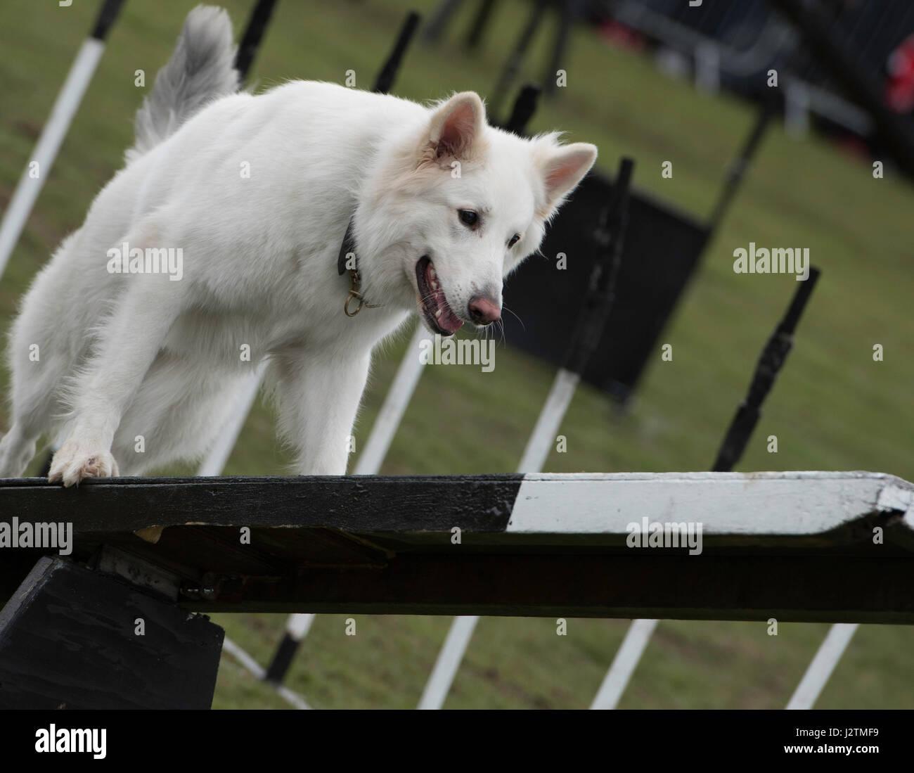 Halifax Dog Show