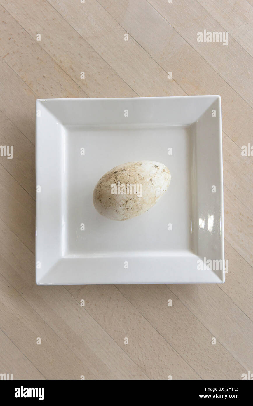 A very fresh goose egg on a plate Unwashed Large egg Shell Natural Nature Minimalist image - Stock Image