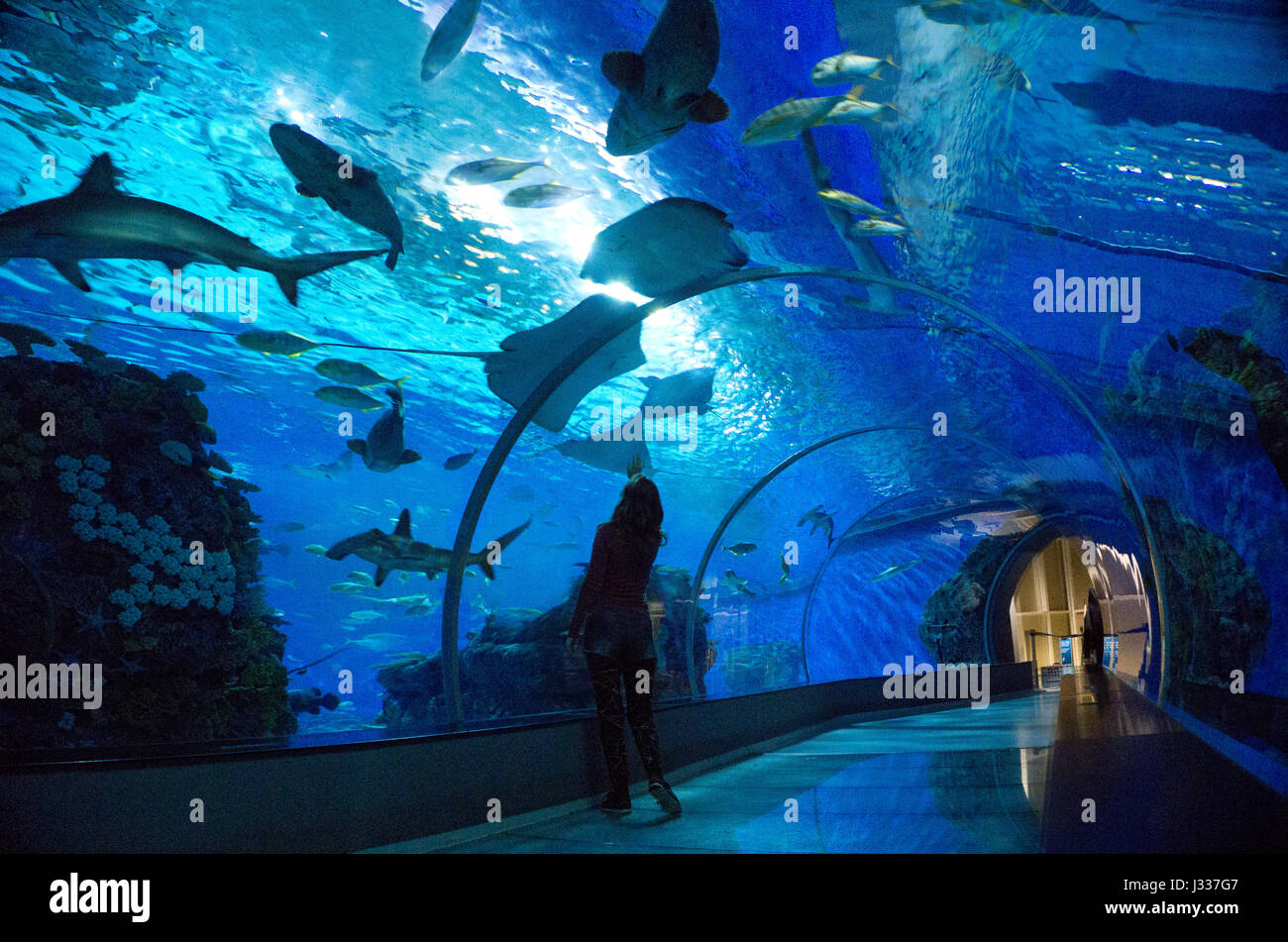 Huge Fish Tank Stock Photos Huge Fish Tank Stock Images