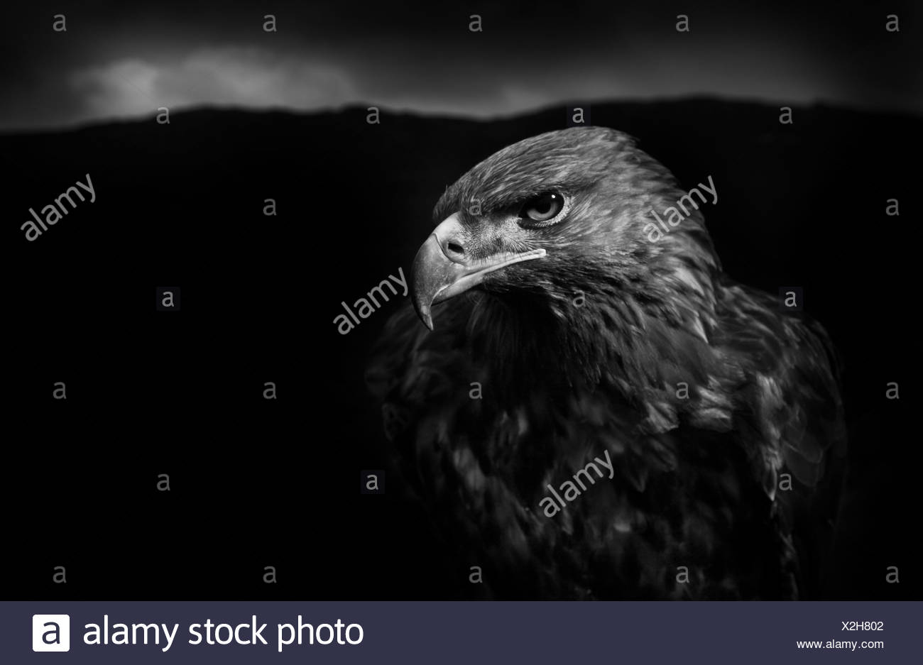 black eagle black single men Destroyed: and the kingdom shall not be left to other people, but it shall break in  pieces and  9/11 was a massive escalation from attacks that involved a single  building  basically, the black eagle trust was down to too little money to fulfill  its.
