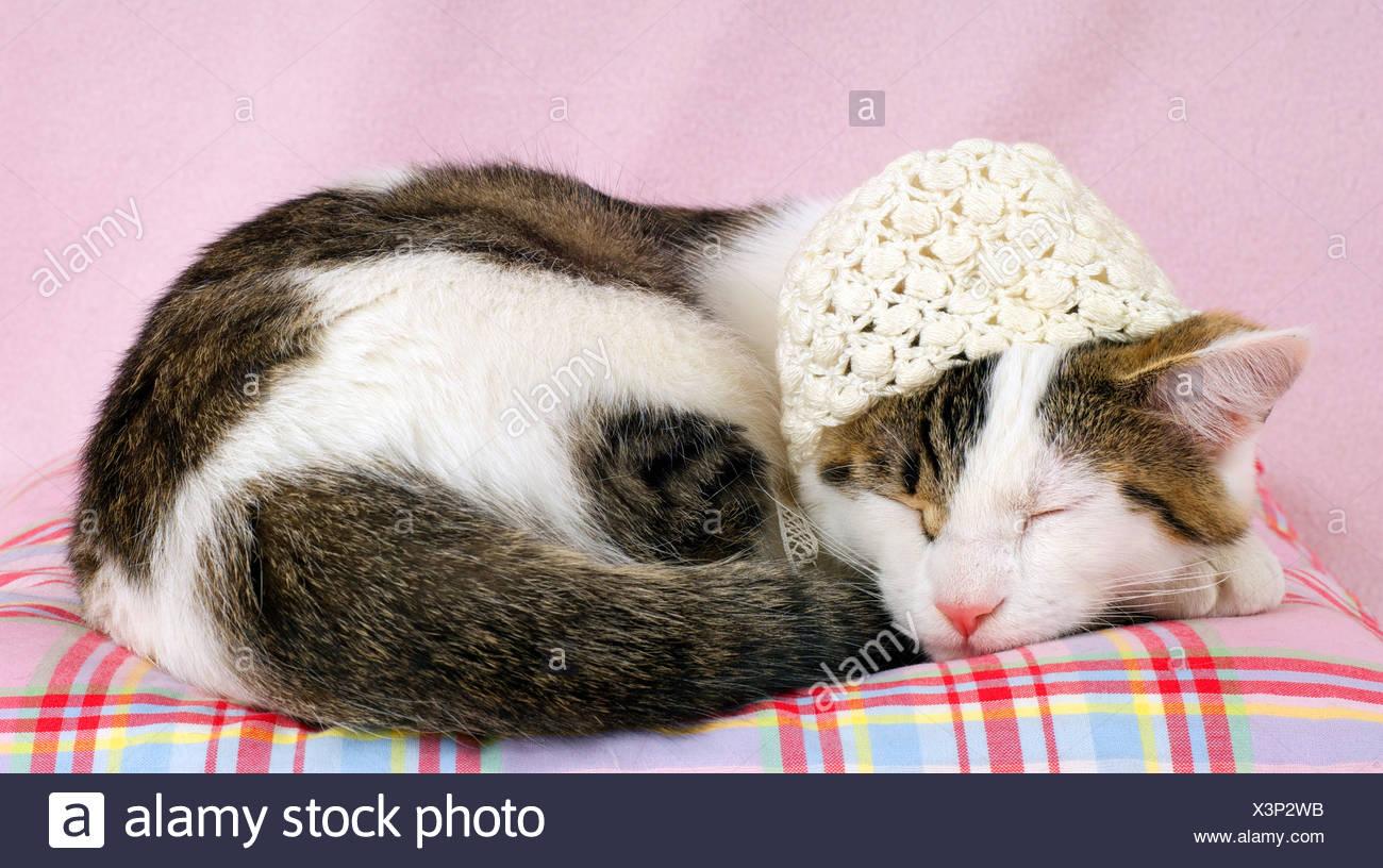 Domestic Cat Felis Catus And Domestic Dog Canis Familiaris