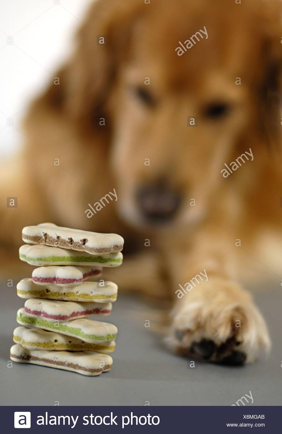 Dog Food Bowl Cake