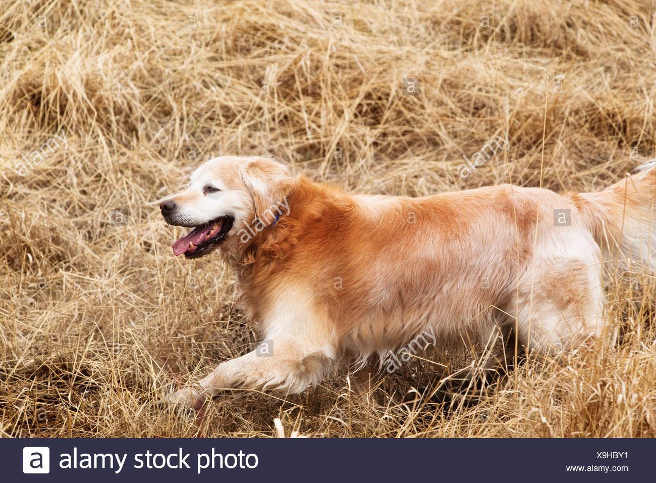 Dogs In Field Pets Stock P Os Dogs In Field Pets Stock