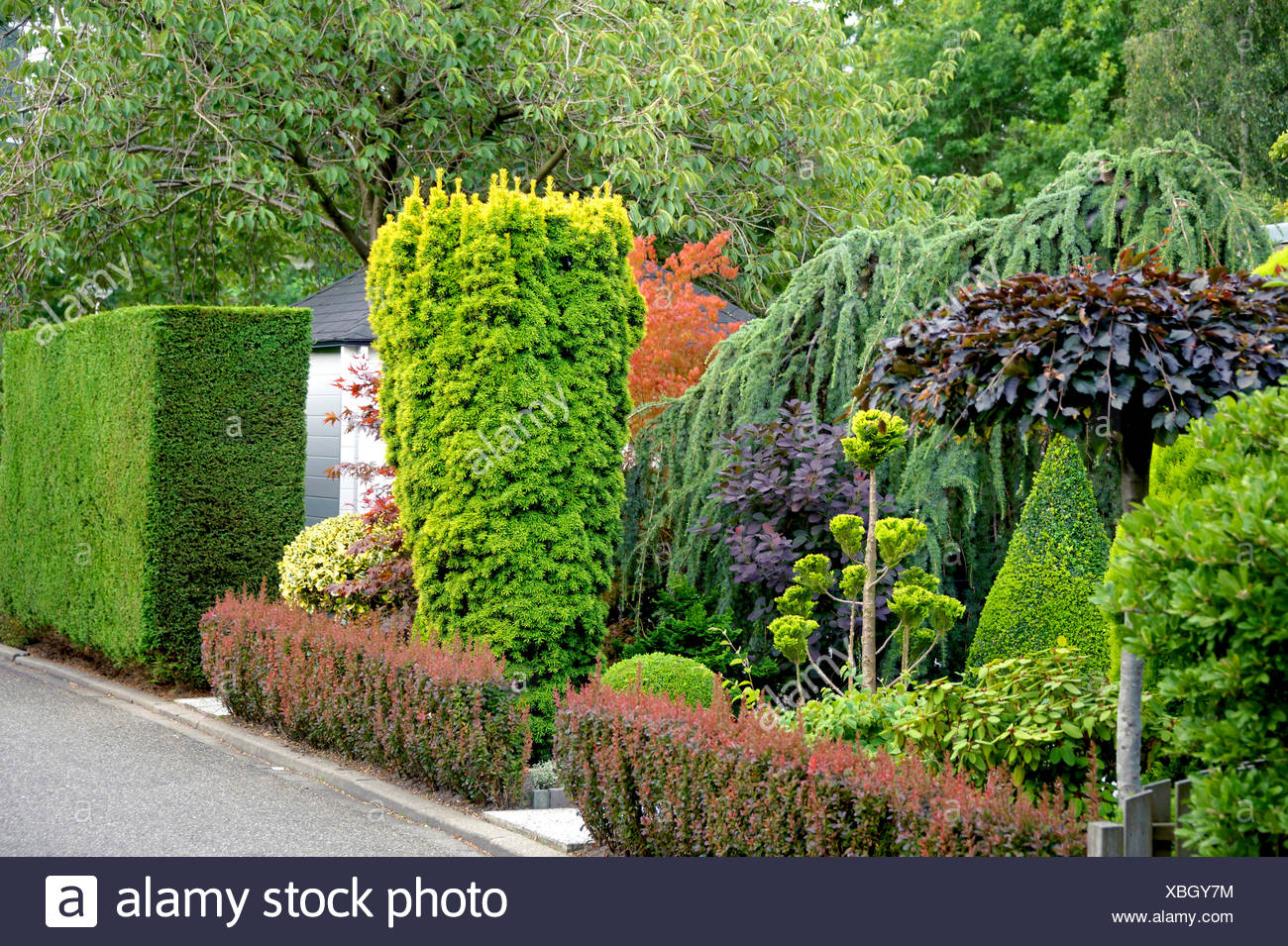 taxus baccata yew hedge stock photos taxus baccata yew. Black Bedroom Furniture Sets. Home Design Ideas