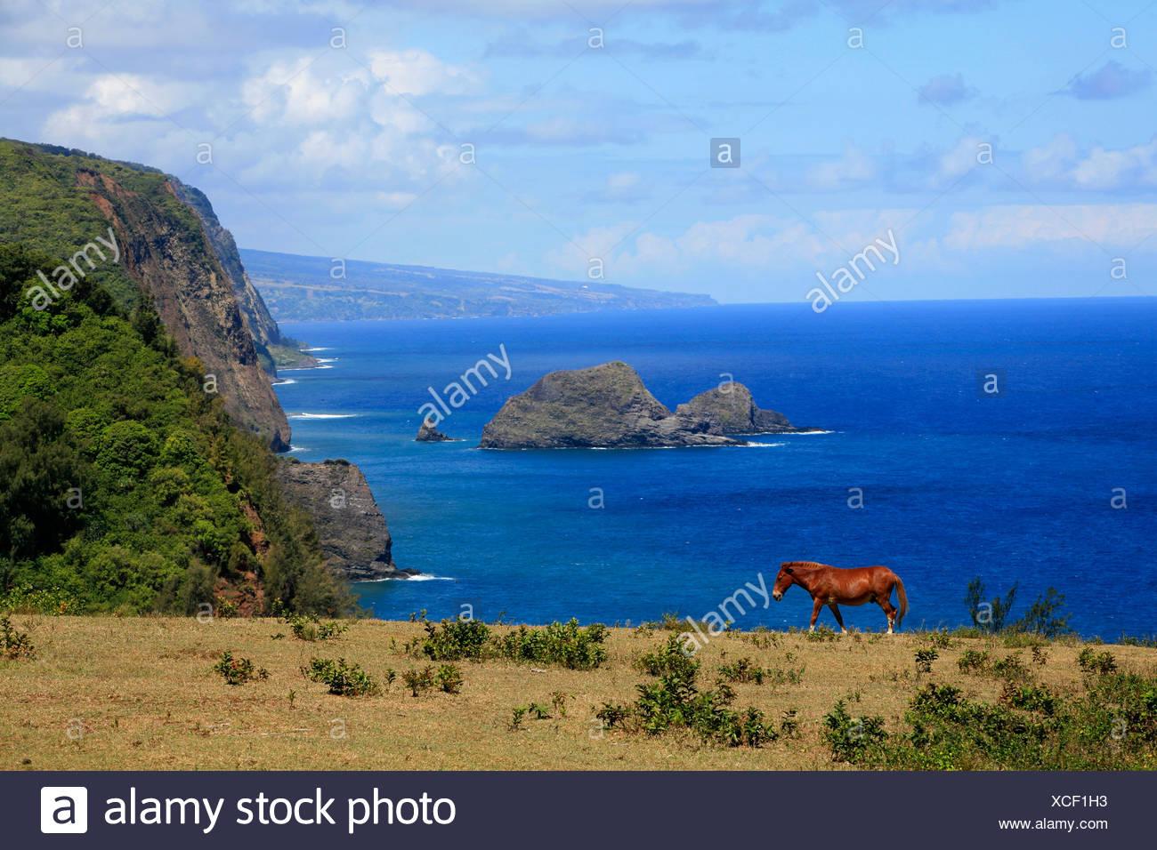 Northwest Coast Big Island