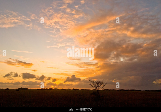 Sunset at Everglades National Park scenic landscape emphasizing open vistas with one small dwarf cypress tree - Stock Image