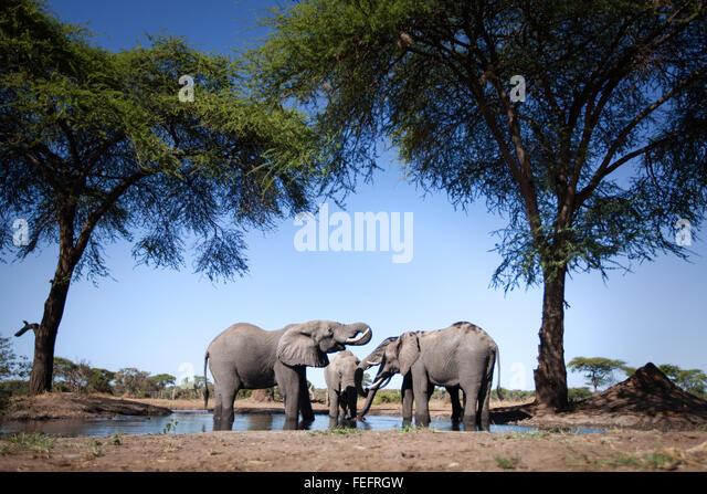 Elephant at a waterhole - Stock-Bilder
