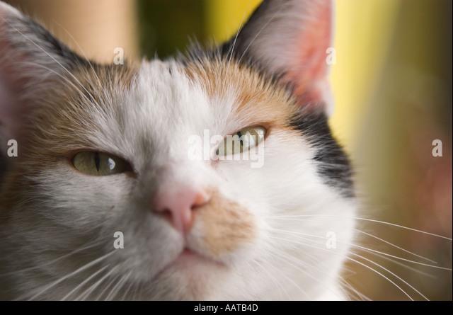 Aloof Cat Stock Photos & Aloof Cat Stock Images - Alamy