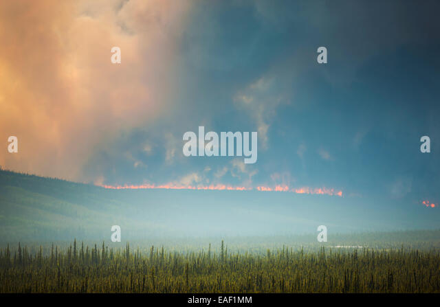 Smoke,Destruction,Alaska,Forest Fire,Hastings - Stock Image