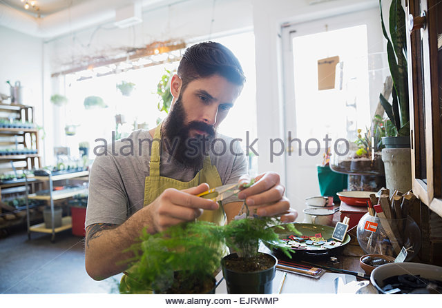 Terrarium shop owner with beard pruning plant - Stock Image