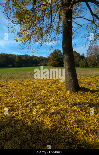 A carpet of autumn leaves in Stanmer Park, Brighton, England - Stock Image