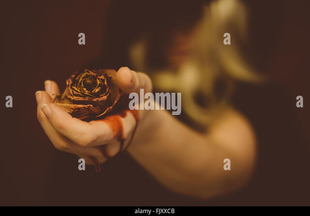 Close-Up Of Woman Hand Holding Dead Rose With Bleeding - Stock Image