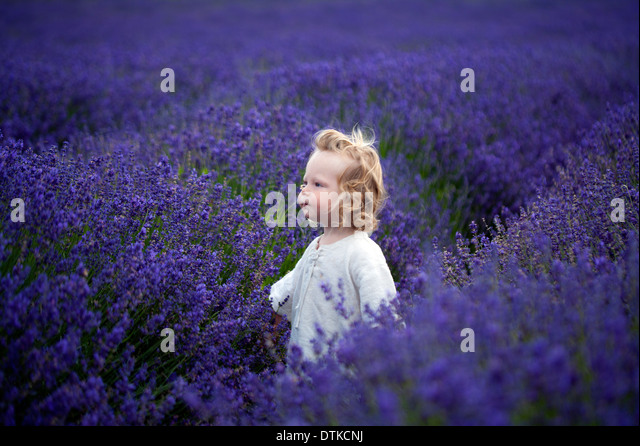 Boy walking in field of lavender - Stock Image