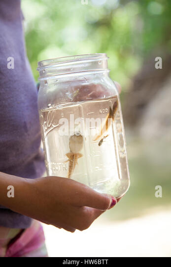 Tadpoles in a jar - Stock Image