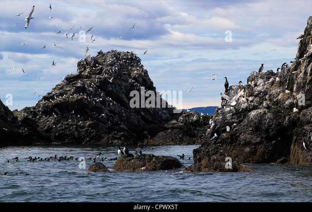 Gull Island Dead Rock