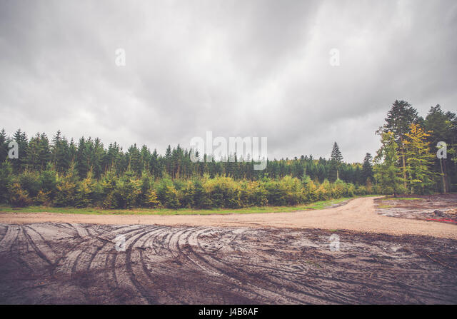 Wheel tracks in a forest in autumn - Stock Image