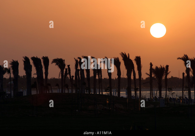 Sunset with palm trees Abu Dhabi UAE - Stock Image