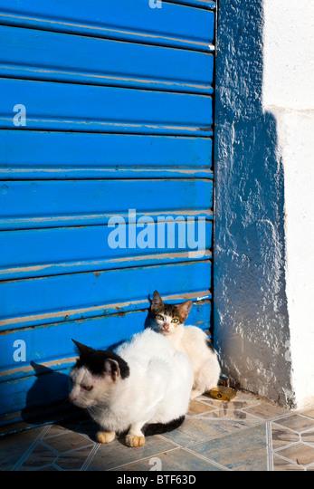 Feral Cat Rescue Palm Beach County