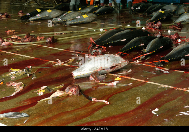 Yellowfin tuna carcasses Thunnus albacares Suao fish market Taiwan Republic of China - Stock Image