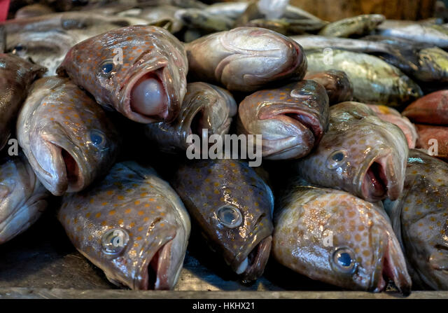Daily fish market stock photos daily fish market stock for Daily fresh fish