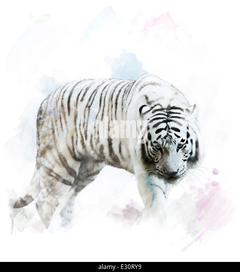Watercolor Digital Painting Of White Tiger Portrait - Stock-Bilder