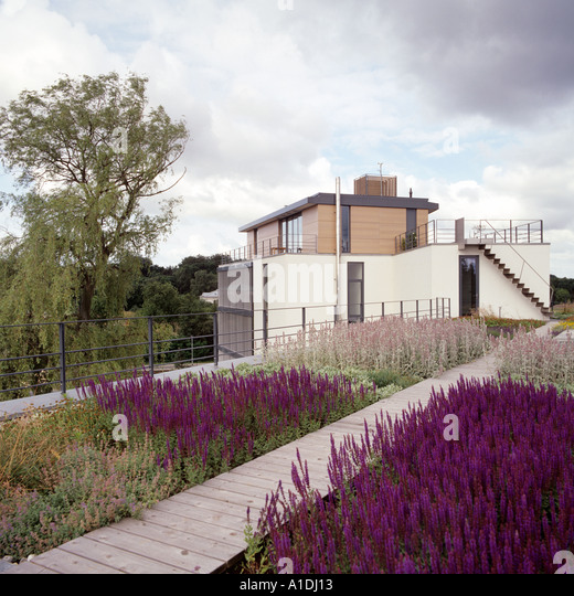 Lavender roofgarden with planked walkway on a contemporary building - Stock Image