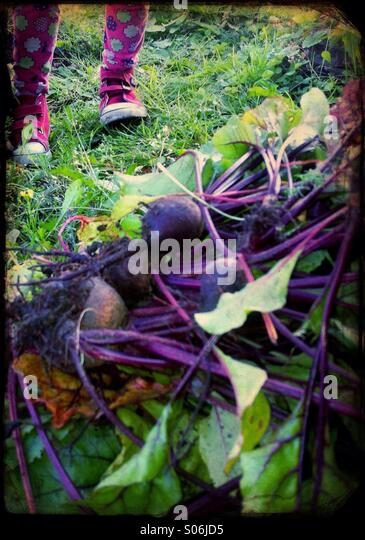 A girl pricked up beetroots - Stock Image