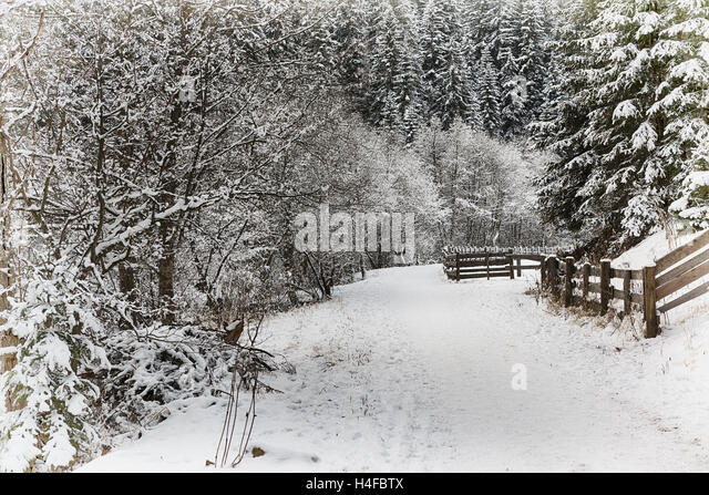 First snow of winter season in a mountain path in the natural park, Italy - Stock Image