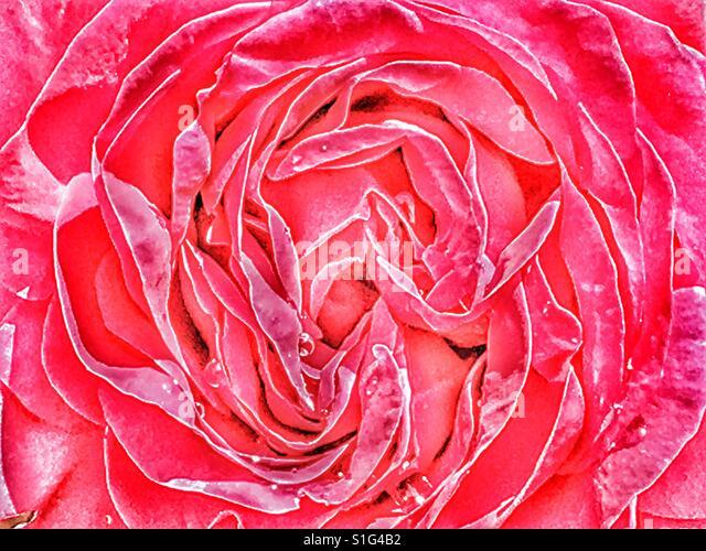 Red rose, abstract detail - Stock-Bilder