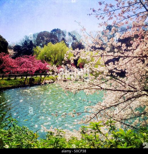 Lovely pond surrounded by white and light pink cherry blossoms. Vintage paper texture overlay. - Stock Image