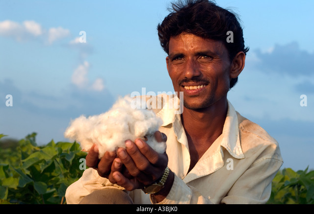 Farmer in Guajarat India grows cotton that he sells under the Fairtrade scheme to Marks and Spencer - Stock Image