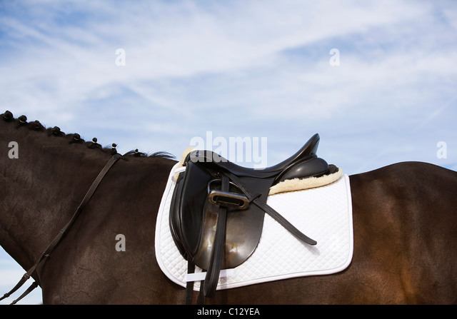 side view of saddled horse - Stock Image