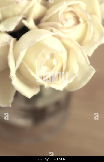 Roses in vase converted to sepia tone - Stock Image