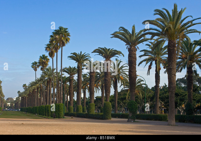 Palm alley in city park, Casablanca, Morocco - Stock Image
