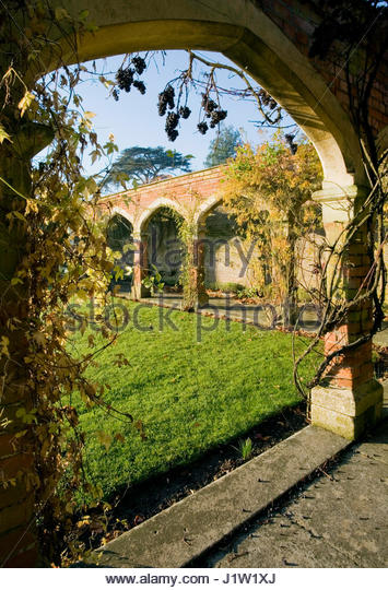 AUTUMN VITUS WITH FRUIT ON STOW HALL GARDENS CLOISTERS - Stock Image