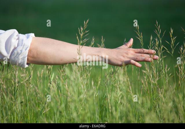 enjoyment,relaxation,grass,arm - Stock Image